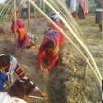 Krishna kämpar för Kamlariflickornas rättigheter