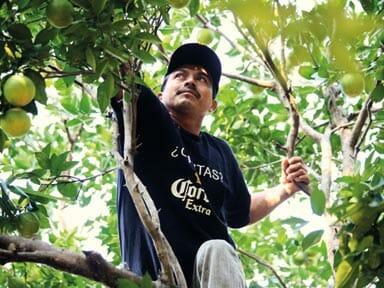 IM Fair trade